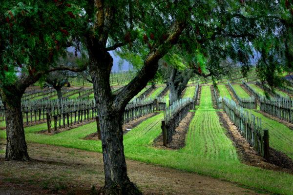 Photography -Vineyard